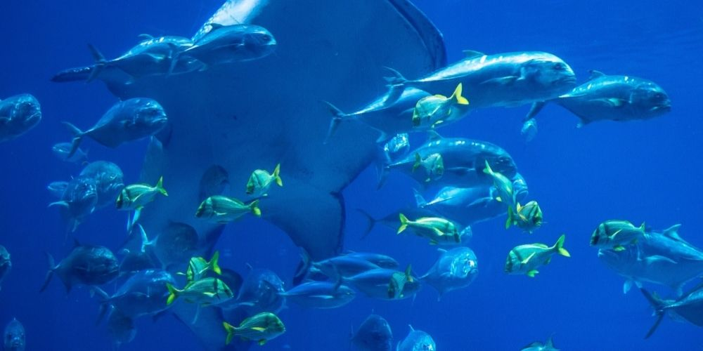Visit the Largest Aquarium in the World